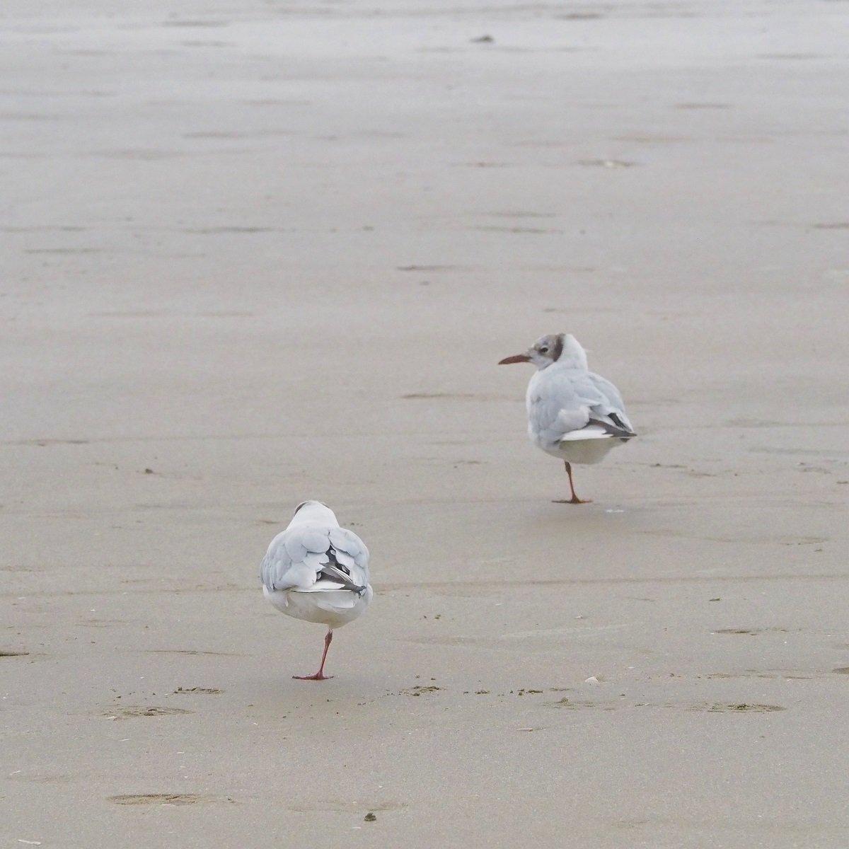 Foto: 2 Möwen am Strand