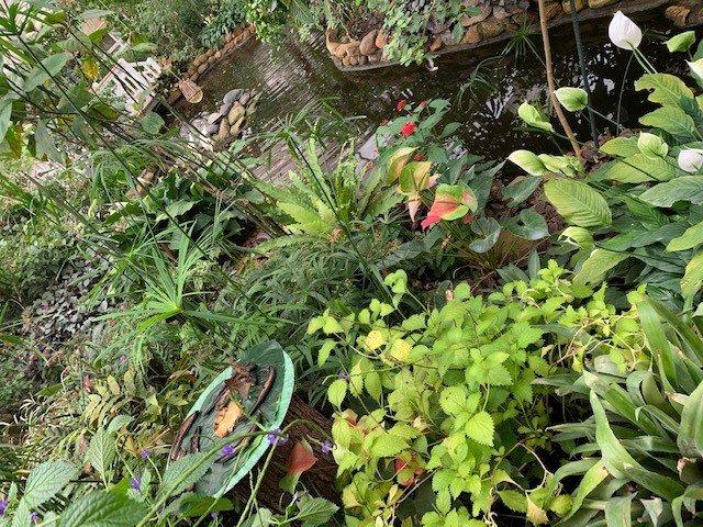 Tropische Pflanzen im Schmetterlingspark
